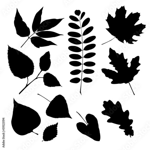 Set of silhouettes of different leaves