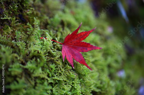 観世音寺の紅葉と苔