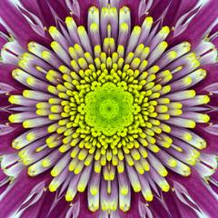Purple Concentric Flower Center. Mandala Kaleidoscopic design