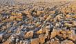 terre agricole sous le givre