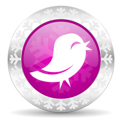 twitter christmas icon