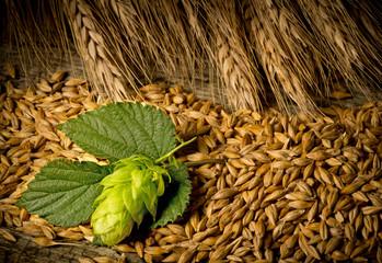 Hop Cones And Barley