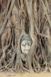 Buddha Head Statue in Banyan Tree, Thailand