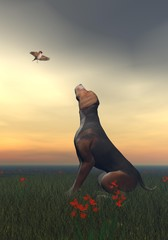 Black tan dog and butterfly - 3D render