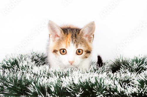 Christmas spotted  kitten and tinsel