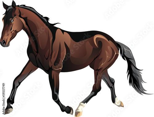 vector running horse