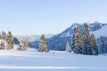 Snowy Trees IV