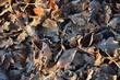 canvas print picture - vereistes Laub im Herbst