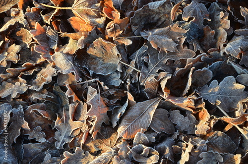 canvas print picture vereistes Laub im Herbst