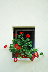 Window with flower on the white wall