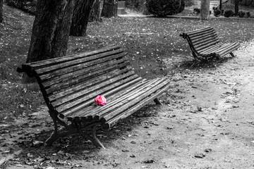 Love in rosa