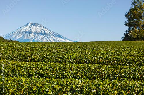 11月の茶畑と富士山