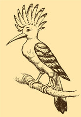 """Vector drawing of a series of sketches """"Birds"""". Hoopoe"""