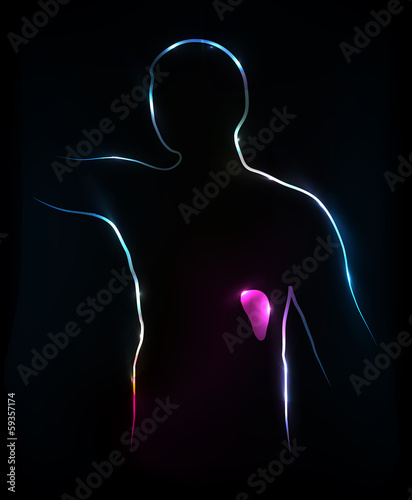 Spleen. Abstract medical illustration, background.