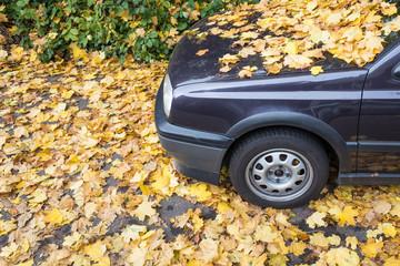 Auto unter Laub begraben