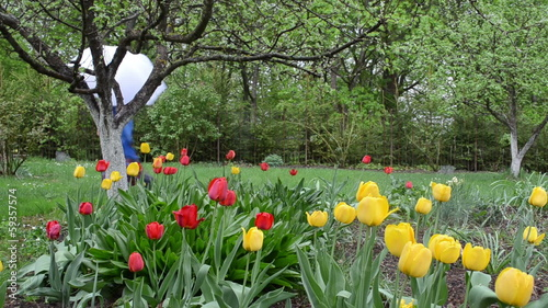 woman welly shoes umbrella walk spring garden colorful tulips