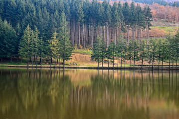 lake with trees reflex  in autumn
