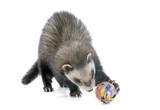 brown ferret and ball