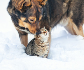 Dog and cat playing together outdoor in the snow