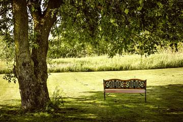 Park bench under tree
