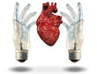 Two hand shaped light bulbs frame human heart