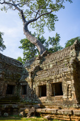 Ruines de ta prohm Temple, Cambodge