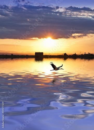 Fotobehang Een Hoekje om te Dromen garza sobre el lago