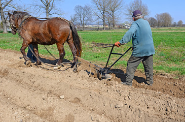 Fallowing of a spring field by a manual plow on horse-drawn