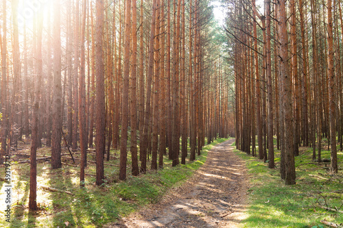canvas print picture wald mit pfad