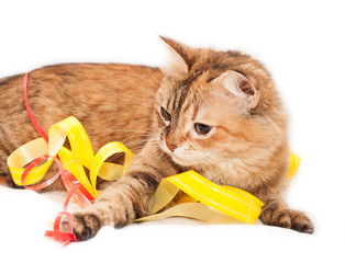 Cat and ribbons