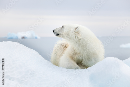 Foto op Canvas Poolcirkel Polar bear at Svalbard