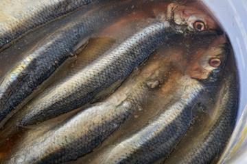 Salted herrings in a bucket, called spegesild.