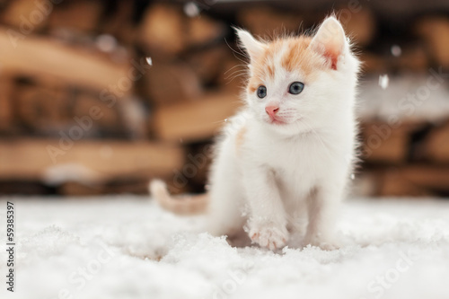 Foto op Canvas Kat Small red lonely kitten on snow
