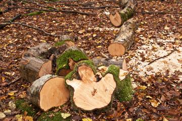 Firewood in autumn woodland