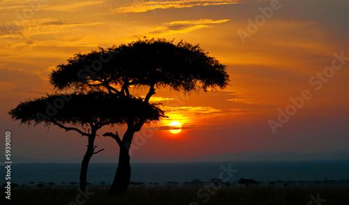 Leinwandbild Motiv sunset in the national park masai mara in kenya