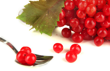 Red berries of viburnum in teaspoon isolated on white