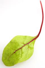 junges mangoldblatt