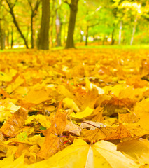 A fallen leaves in autumn forest