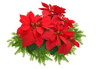 christmas tree branch with red poinsettia