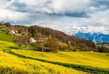 Beautiful spring landscape with raps field