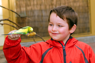 Happy boy holding and feeding parakeet