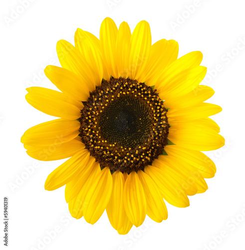 Aluminium Zonnebloemen sunflower