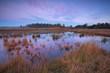 beautiful autumn sunrise over swamp, Friesland