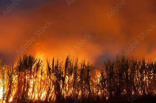 sugarcane be on fire