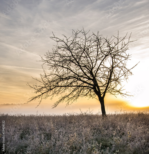 Albero solitario all'Alba