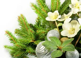 Weihnachtsgesteck mit Christrosen