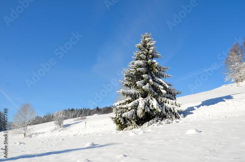 fichte baum im schnee weihnachtsbaum stock photo and. Black Bedroom Furniture Sets. Home Design Ideas