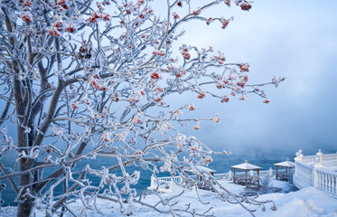 Snow covered rowanberry tree (lat. Sorbus)