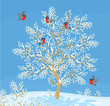 bullfinches on a snow-covered tree
