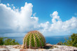 Cactus on stone wall against ocean and blue sky